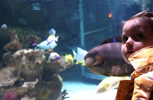 lili aquari